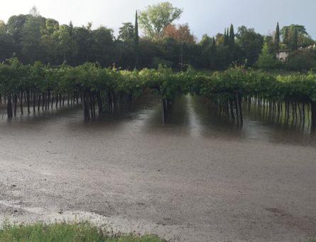 vigne allagate